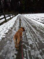 Bild commov.de | Artikel Laufen mit Hund