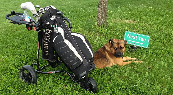 Bild commov.de   Artikel Golf-Tagebuch: Hau wech