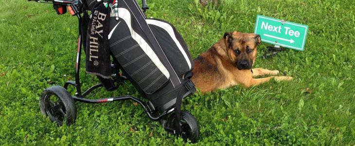 Bild commov.de | Artikel Hund und Kommunikation